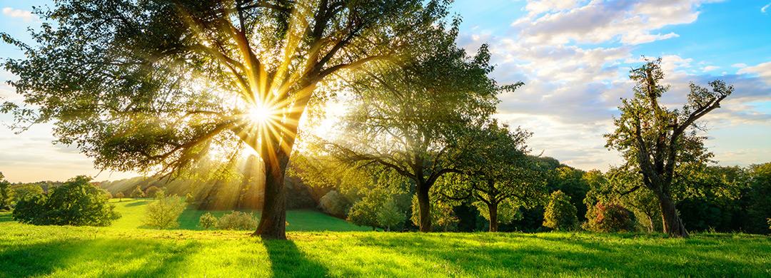 Sonne Baum Gegenlicht